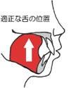 小さいうちから正しい呼吸をする事で歯並びは変わります